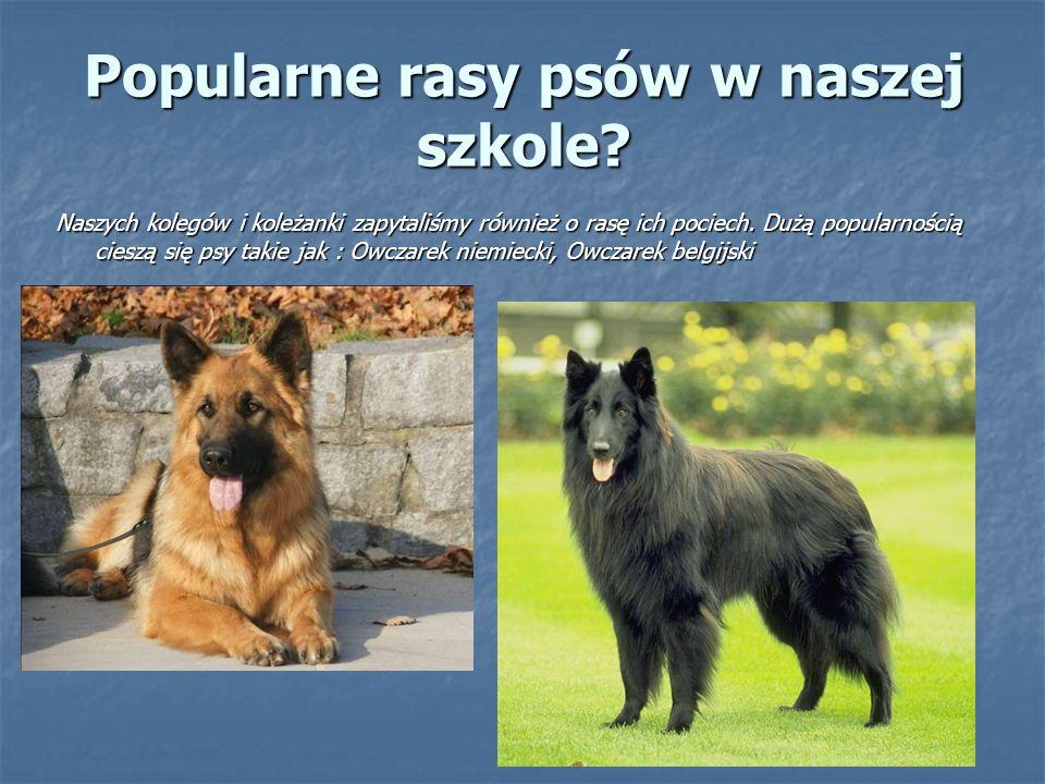 Popularne rasy psów w naszej szkole