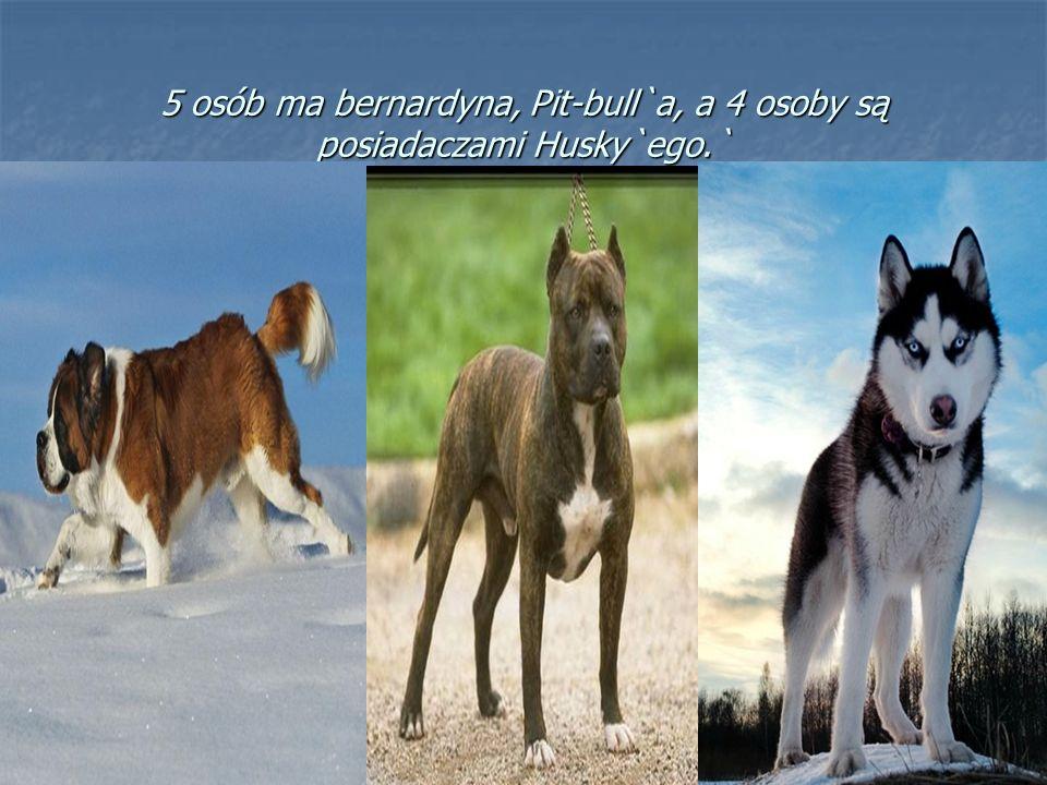 5 osób ma bernardyna, Pit-bull`a, a 4 osoby są posiadaczami Husky`ego