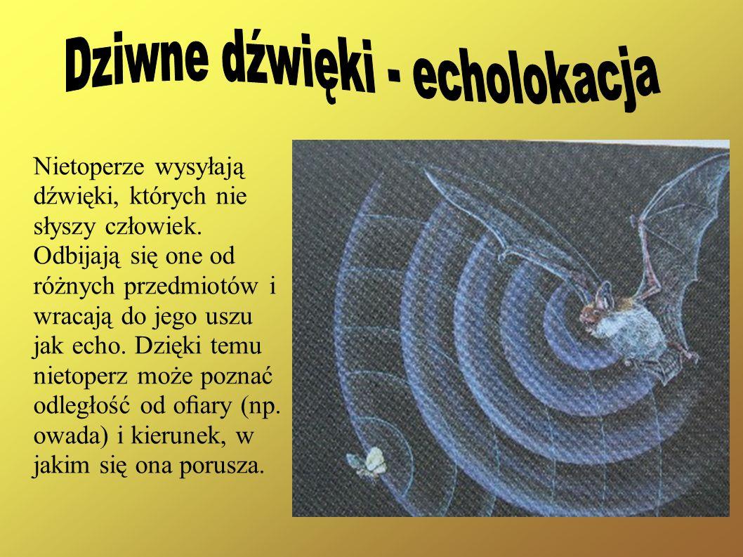 Dziwne dźwięki - echolokacja