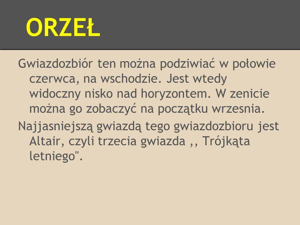 ORZEŁ
