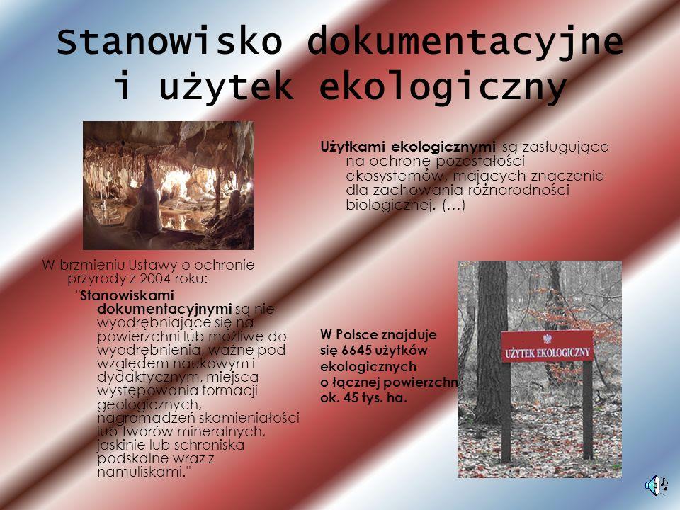 Stanowisko dokumentacyjne i użytek ekologiczny