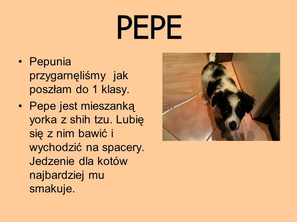PEPE Pepunia przygarnęliśmy jak poszłam do 1 klasy.