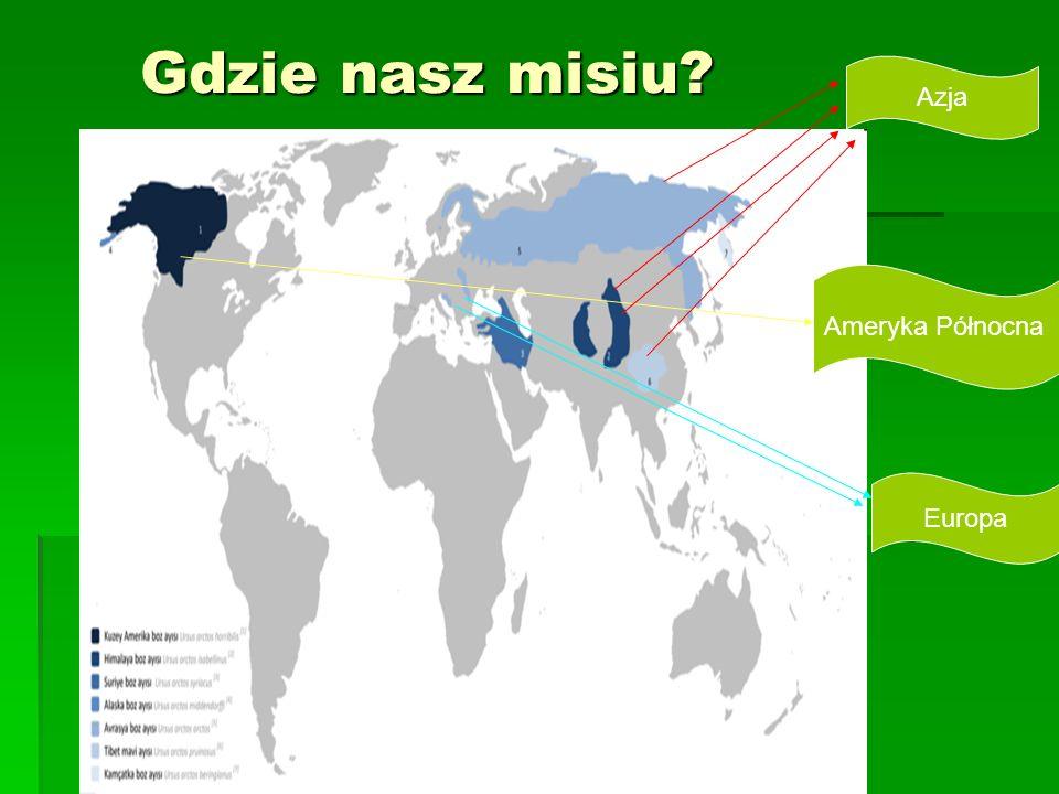 Gdzie nasz misiu Azja Ameryka Północna Europa