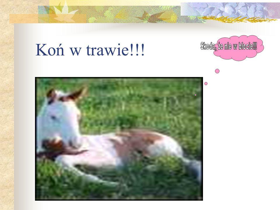 Koń w trawie!!! Skoda, że nie w błocie!!!