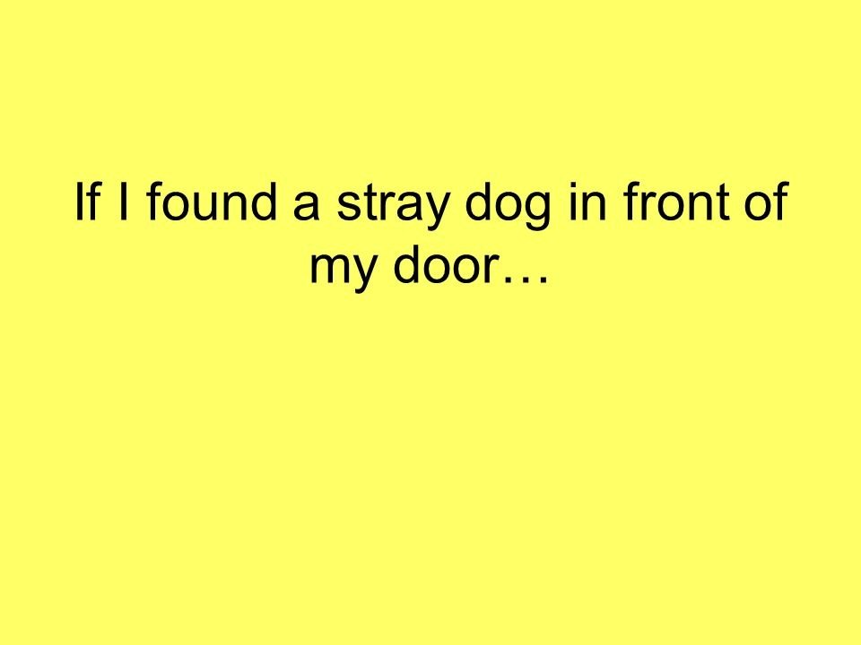 If I found a stray dog in front of my door…