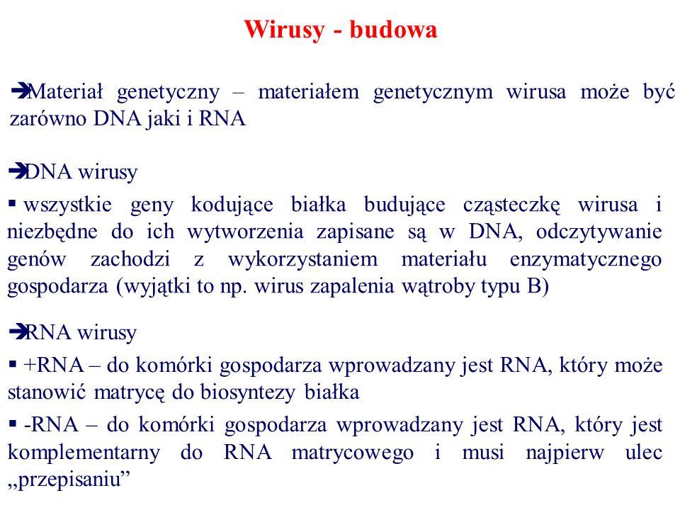 Wirusy - budowa Materiał genetyczny – materiałem genetycznym wirusa może być zarówno DNA jaki i RNA.