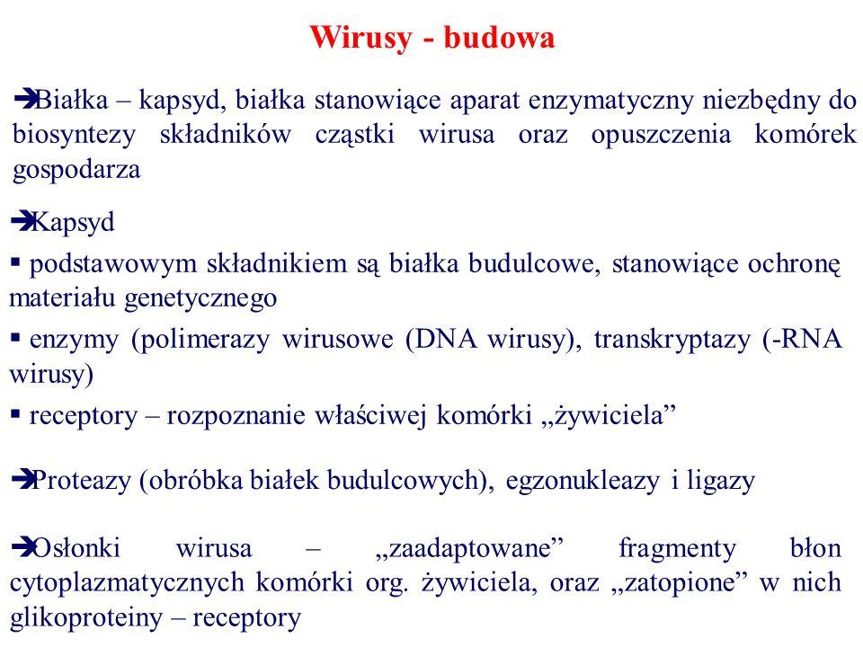 Wirusy - budowa