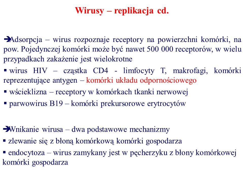 Wirusy – replikacja cd.