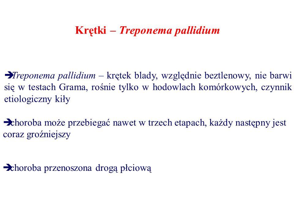 Krętki – Treponema pallidium