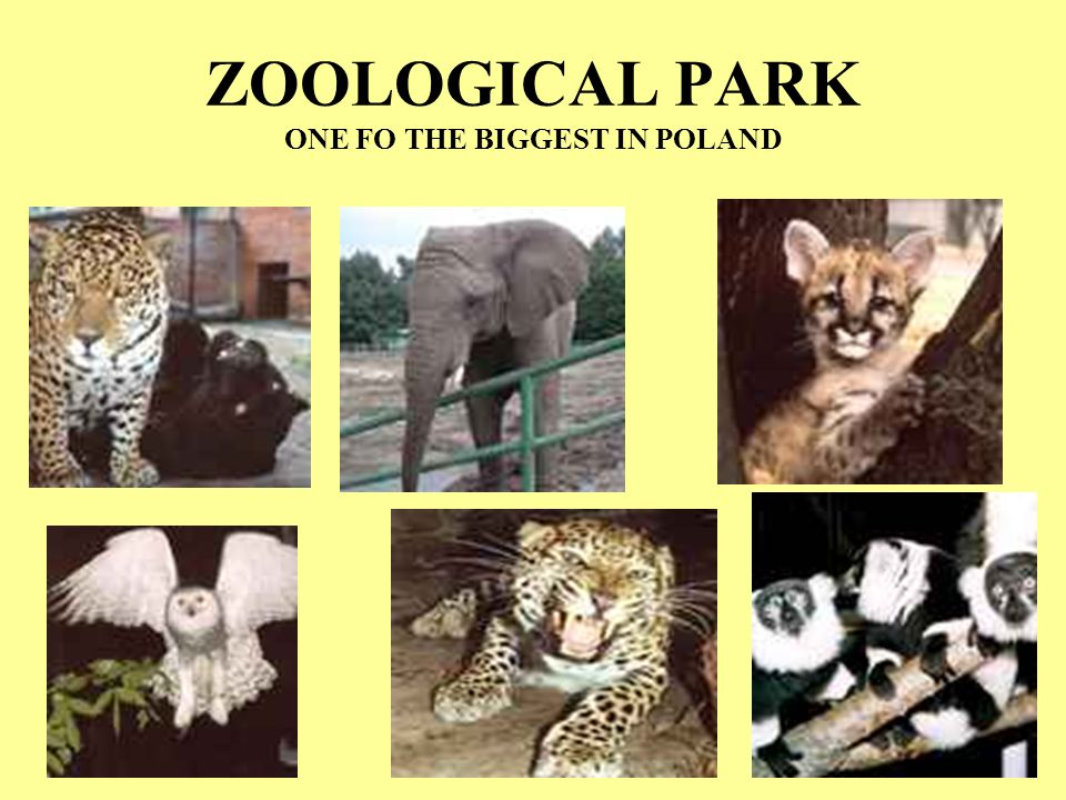 ZOOLOGICAL PARK ONE FO THE BIGGEST IN POLAND