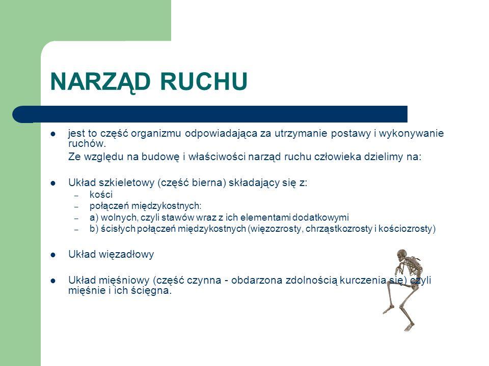NARZĄD RUCHUjest to część organizmu odpowiadająca za utrzymanie postawy i wykonywanie ruchów.