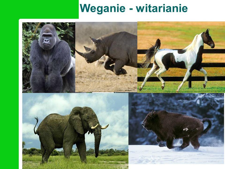 Weganie - witarianie