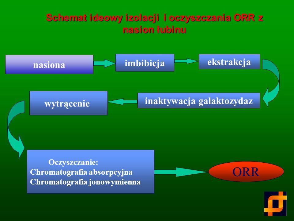 Schemat ideowy izolacji i oczyszczania ORR z nasion łubinu
