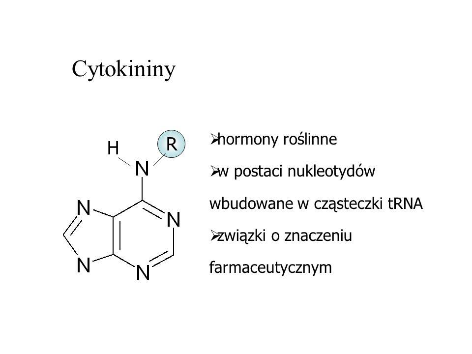 Cytokininy R H hormony roślinne