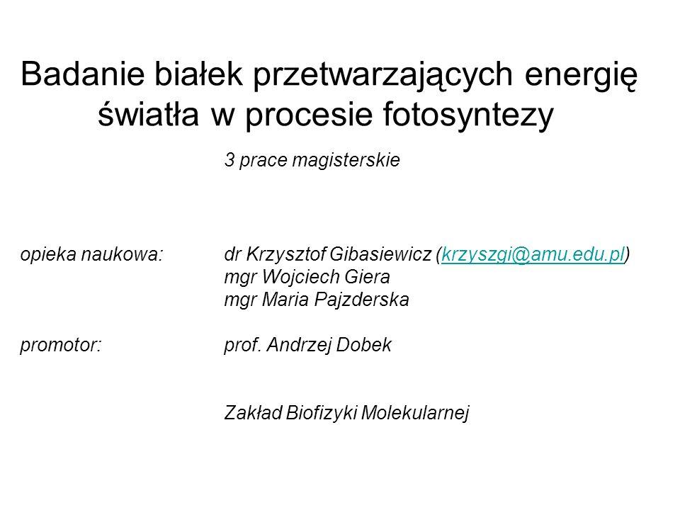 Badanie białek przetwarzających energię światła w procesie fotosyntezy 3 prace magisterskie opieka naukowa: dr Krzysztof Gibasiewicz (krzyszgi@amu.edu.pl) mgr Wojciech Giera mgr Maria Pajzderska promotor: prof.