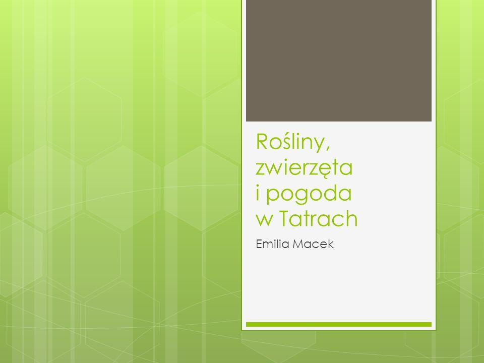 Rośliny, zwierzęta i pogoda w Tatrach