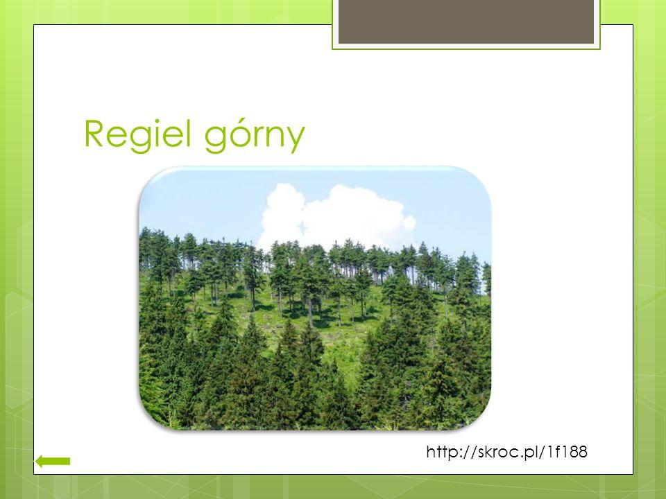 Regiel górny http://skroc.pl/1f188