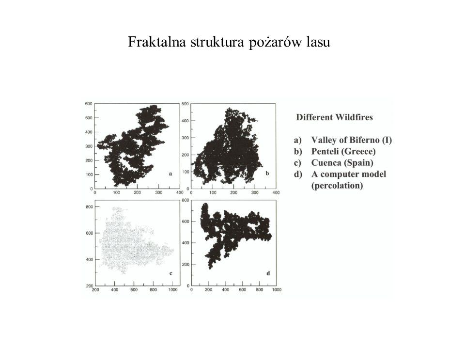 Fraktalna struktura pożarów lasu