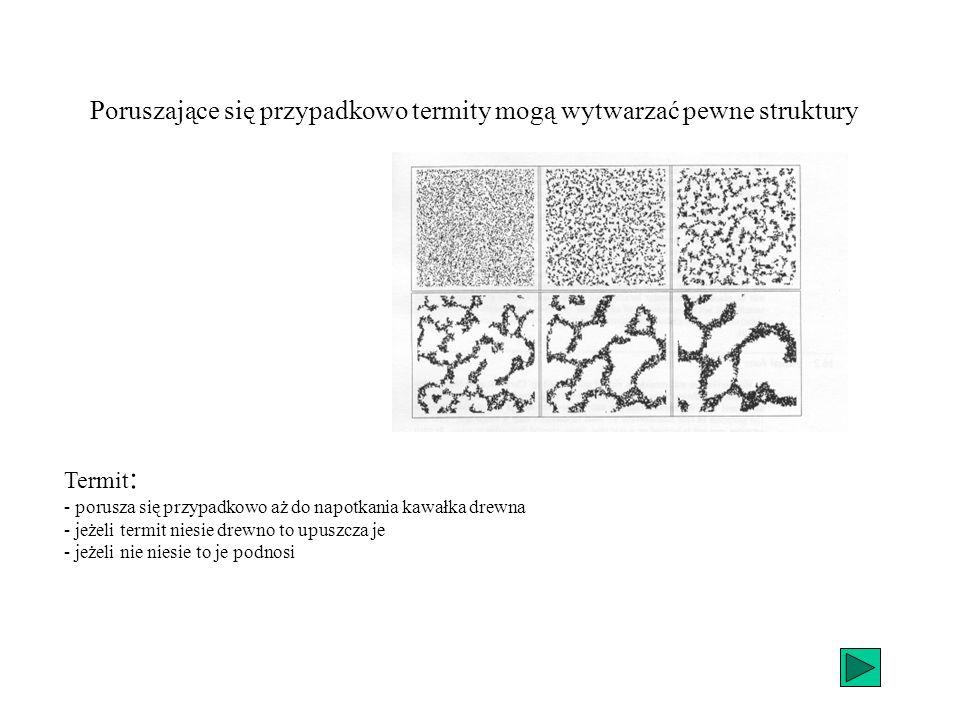 Poruszające się przypadkowo termity mogą wytwarzać pewne struktury