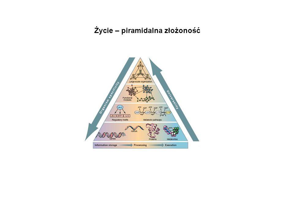 Życie – piramidalna złożoność