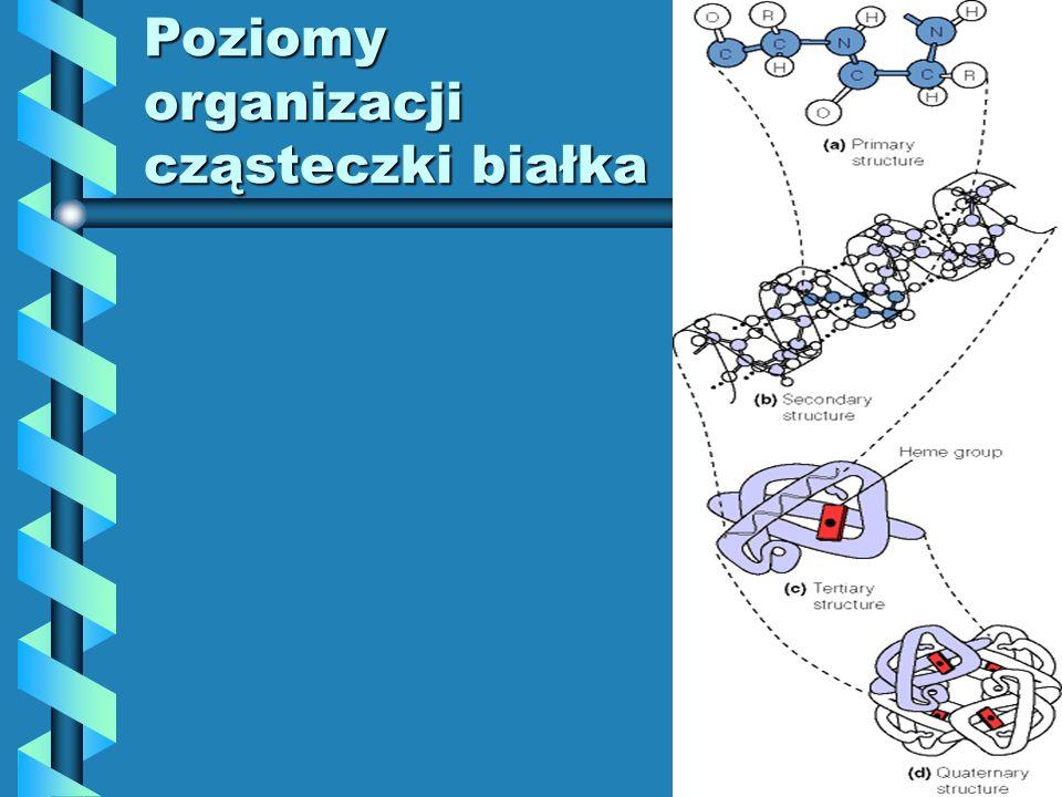 Poziomy organizacji cząsteczki białka