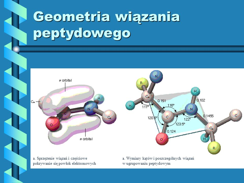 Geometria wiązania peptydowego