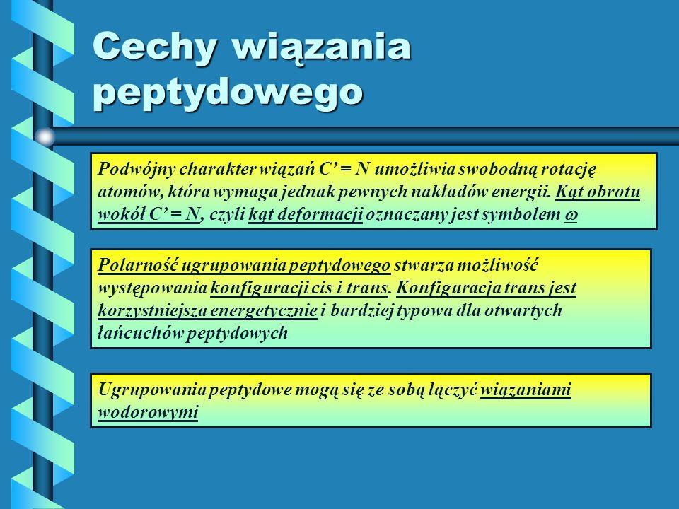 Cechy wiązania peptydowego