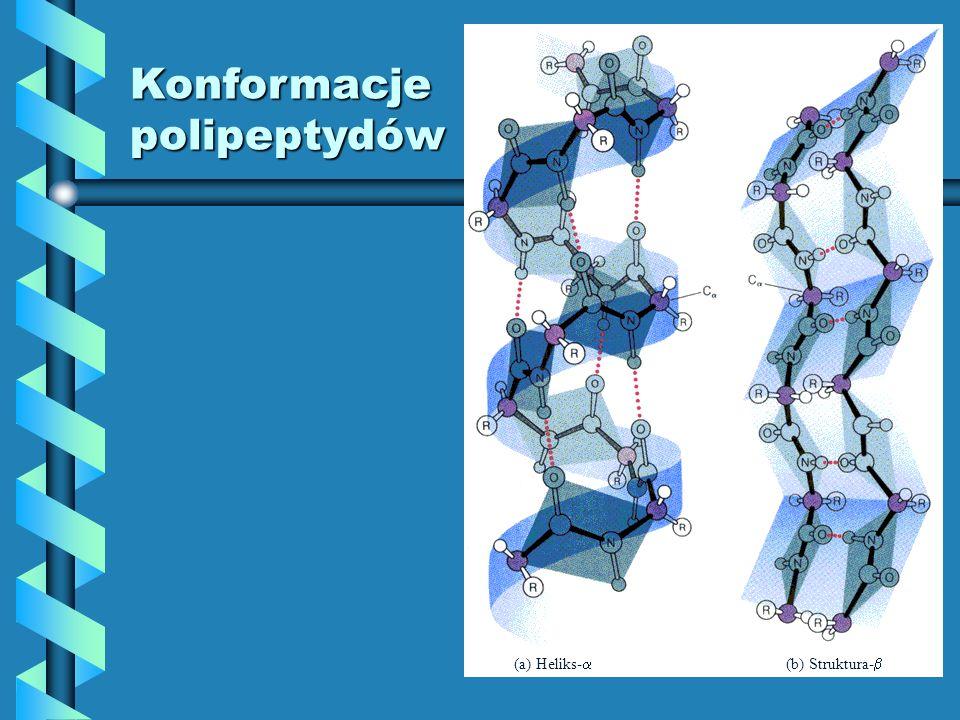 Konformacje polipeptydów (a) Heliks- (b) Struktura-