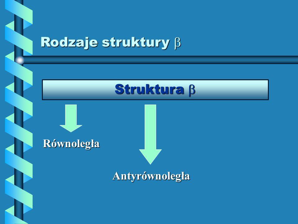Rodzaje struktury  Struktura  Równoległa Antyrównoległa