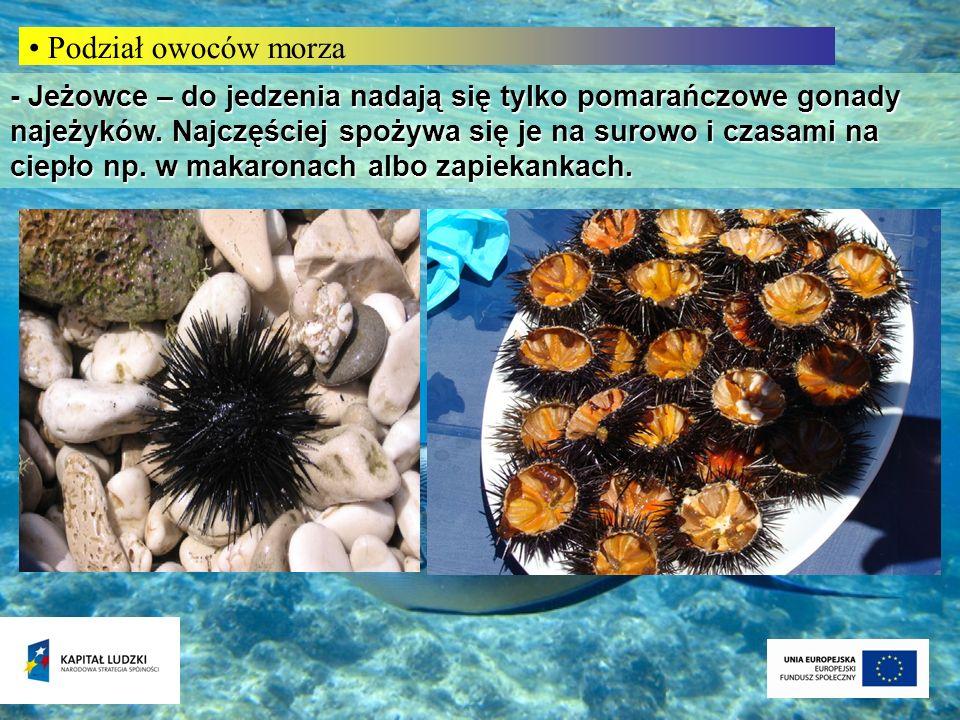 Podział owoców morza