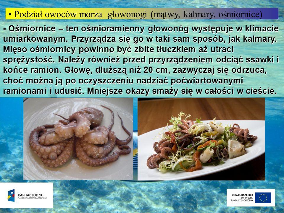 Podział owoców morza głowonogi (mątwy, kalmary, ośmiornice)