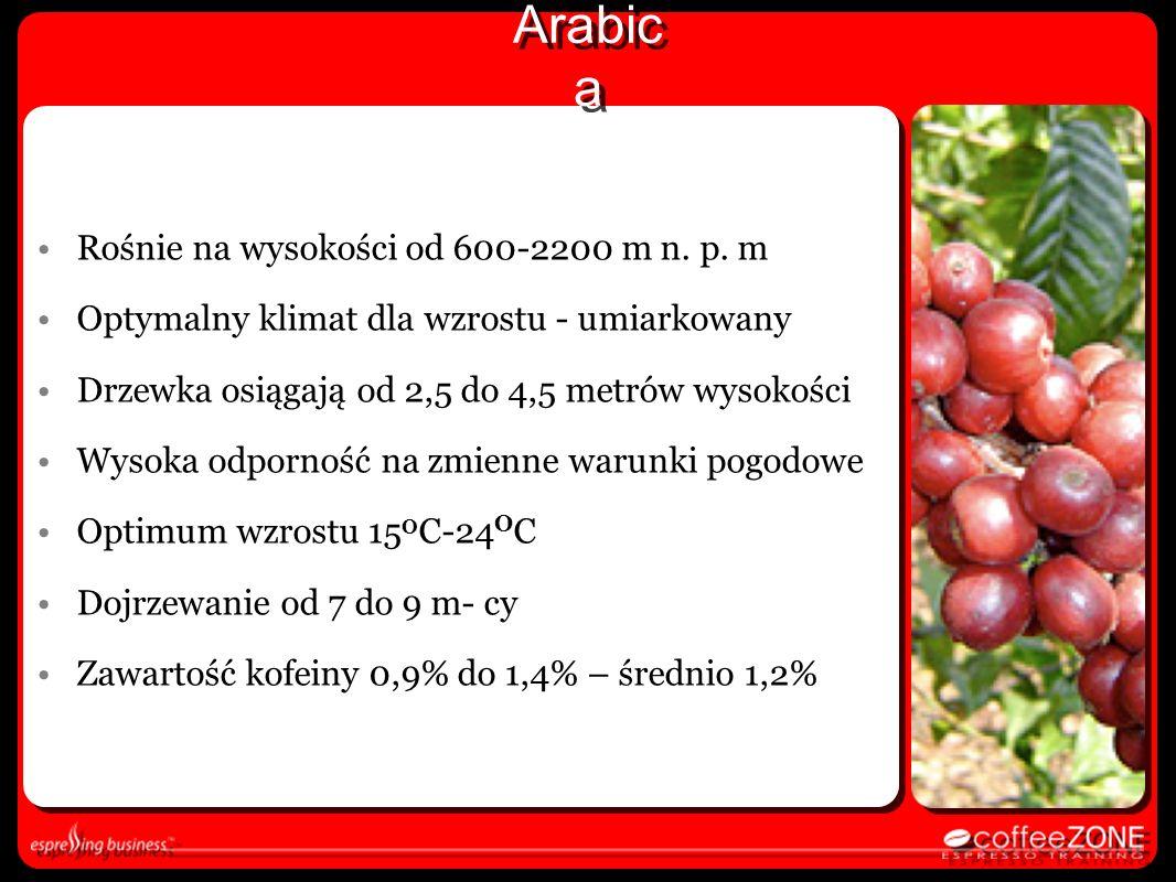 Arabica Rośnie na wysokości od 600-2200 m n. p. m