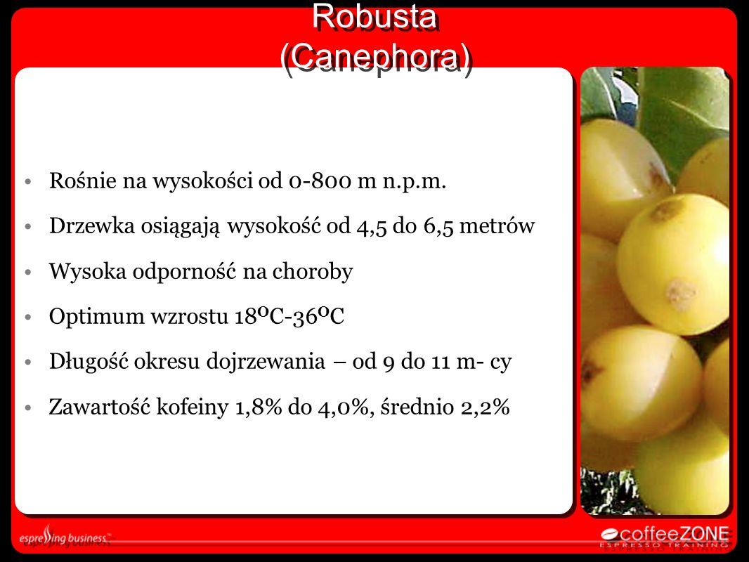 Robusta (Canephora) Rośnie na wysokości od 0-800 m n.p.m.
