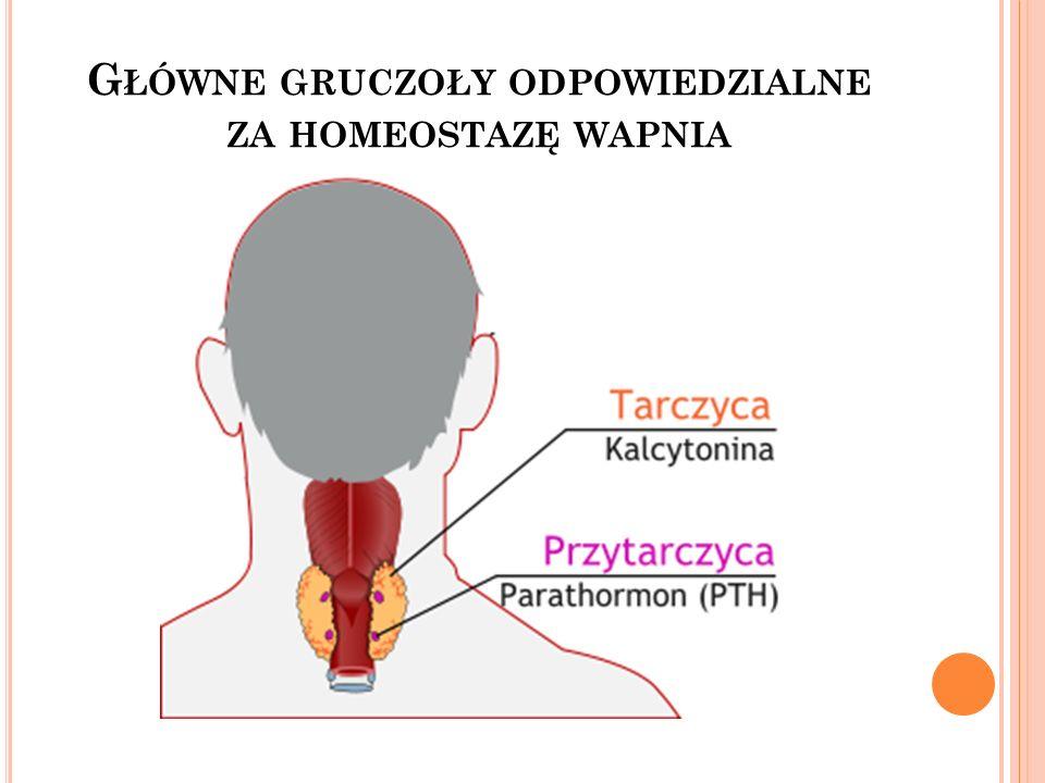 Główne gruczoły odpowiedzialne za homeostazę wapnia