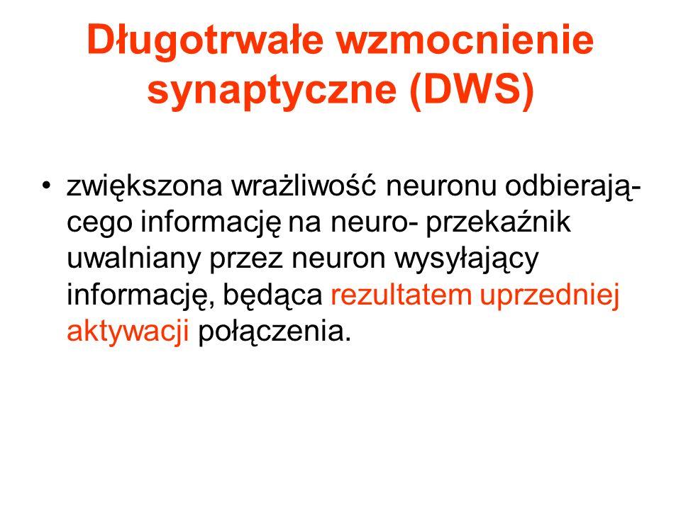 Długotrwałe wzmocnienie synaptyczne (DWS)