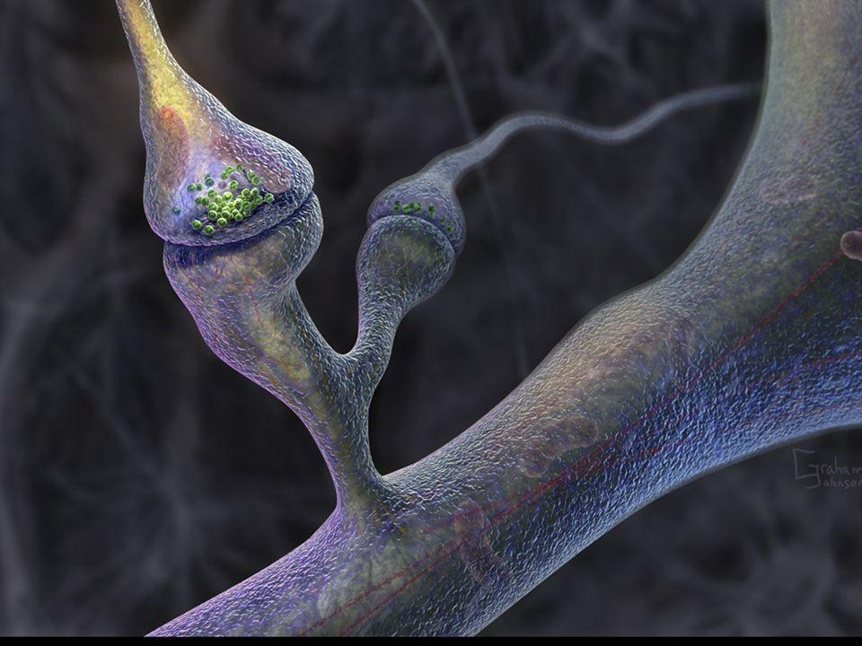 Komórkowe ścieżki pamięci
