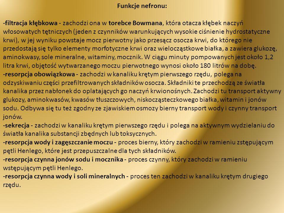 Funkcje nefronu: