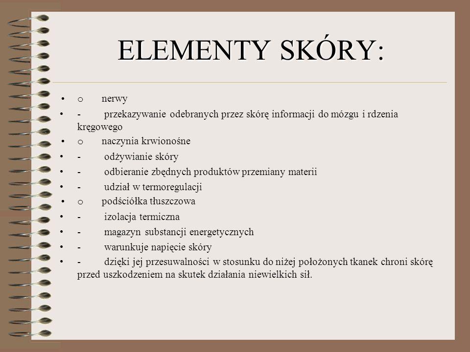 ELEMENTY SKÓRY: o nerwy