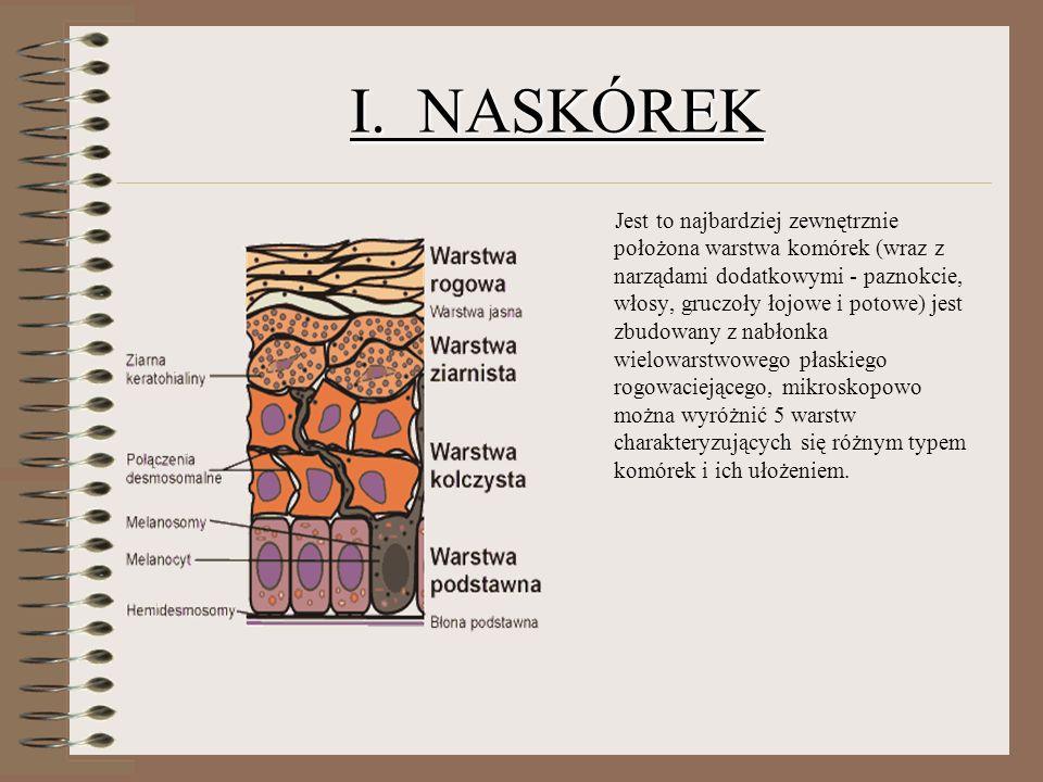 I. NASKÓREK