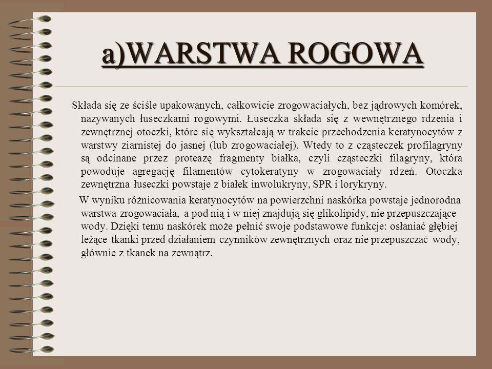 a)WARSTWA ROGOWA