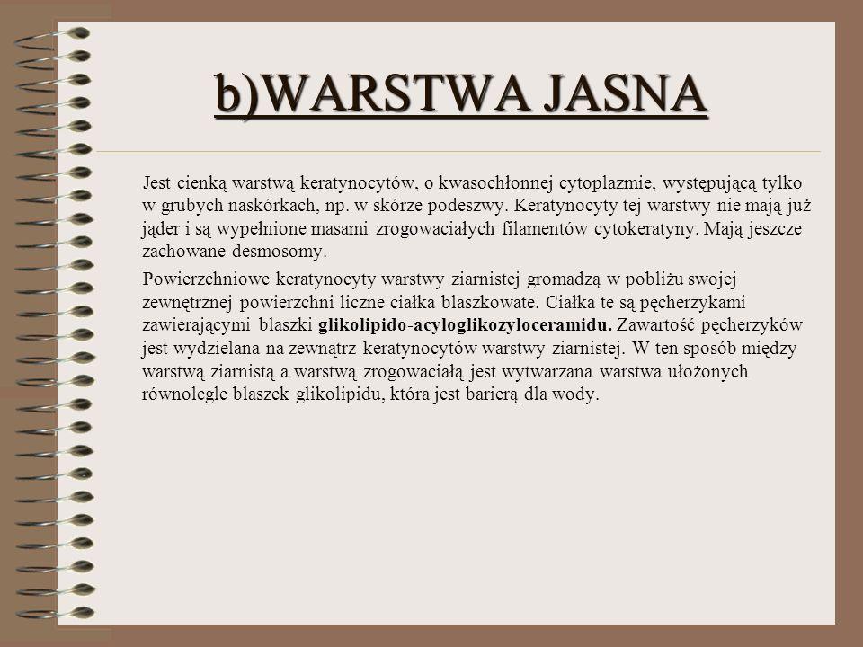 b)WARSTWA JASNA