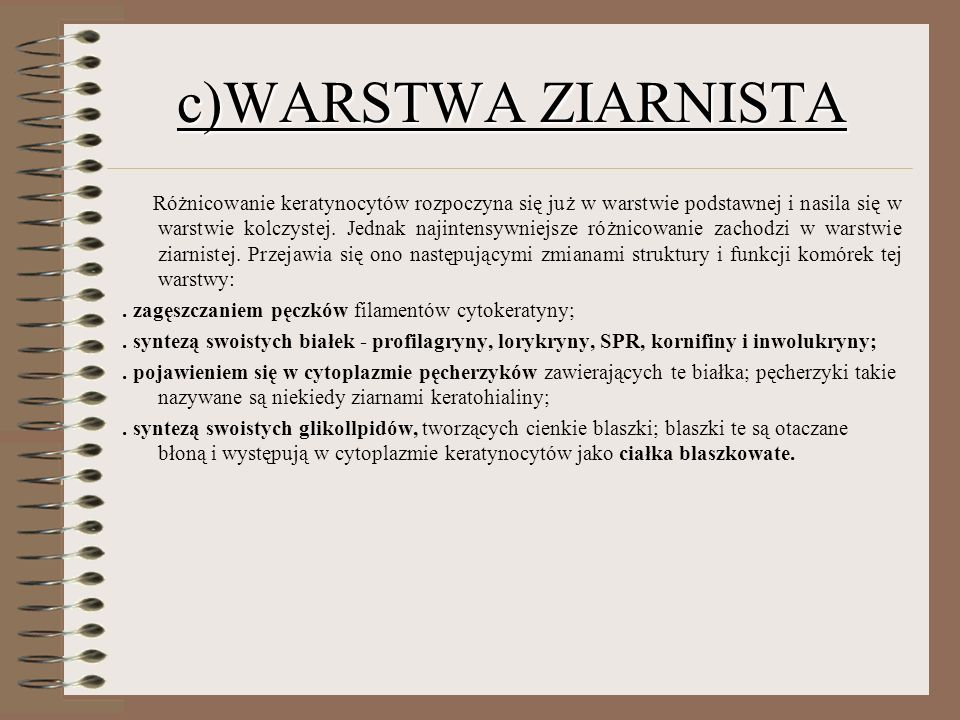 c)WARSTWA ZIARNISTA
