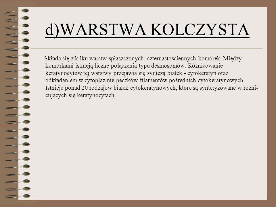 d)WARSTWA KOLCZYSTA