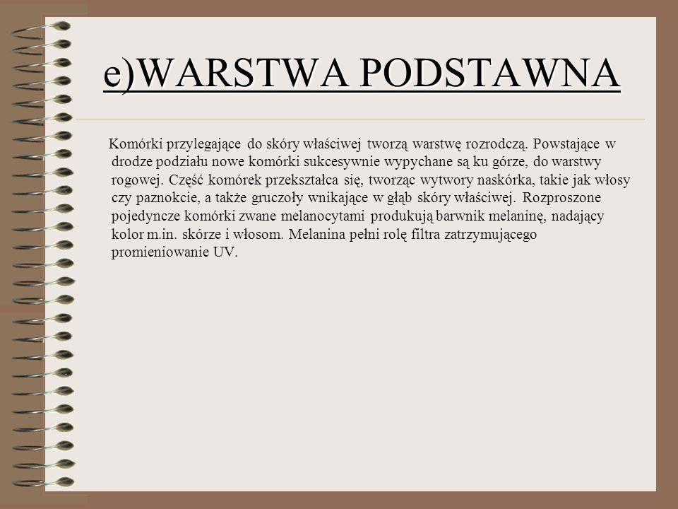 e)WARSTWA PODSTAWNA