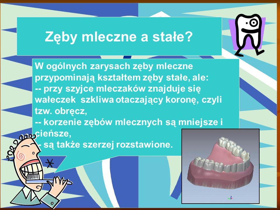Zęby mleczne a stałe W ogólnych zarysach zęby mleczne przypominają kształtem zęby stałe, ale: