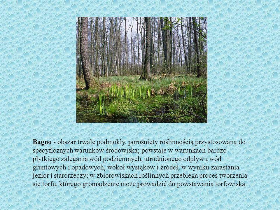 Bagno - obszar trwale podmokły, porośnięty roślinnością przystosowaną do specyficznych warunków środowiska; powstaje w warunkach bardzo płytkiego zalegania wód podziemnych, utrudnionego odpływu wód gruntowych i opadowych, wokół wysięków i źródeł, w wyniku zarastania jezior i starorzeczy; w zbiorowiskach roślinnych przebiega proces tworzenia się torfu, którego gromadzenie może prowadzić do powstawania torfowiska.