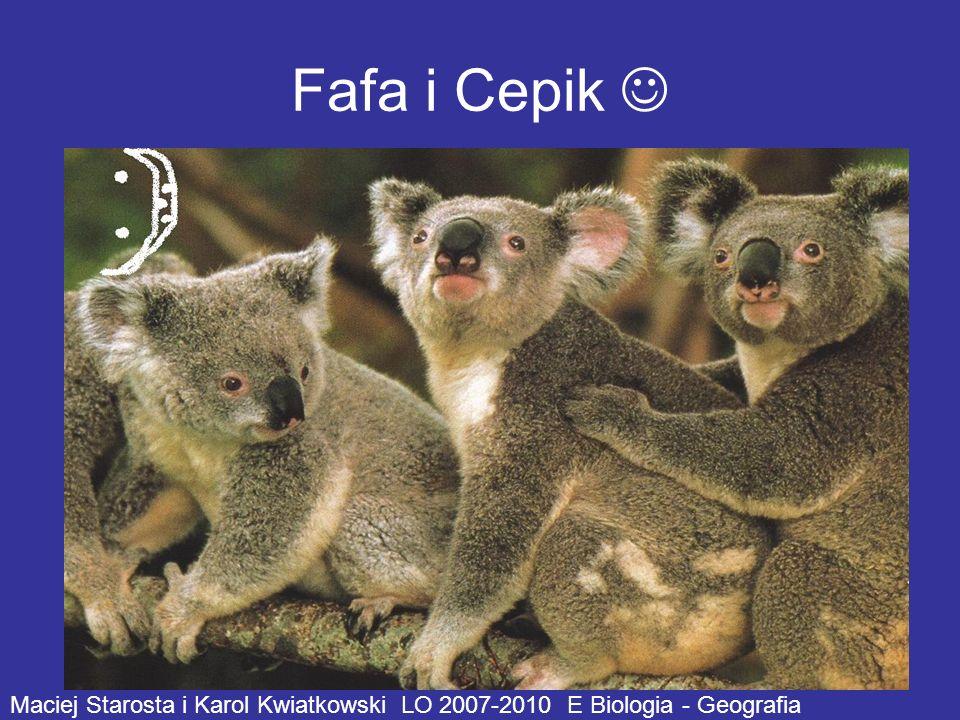 Fafa i Cepik  Maciej Starosta i Karol Kwiatkowski LO 2007-2010 E Biologia - Geografia