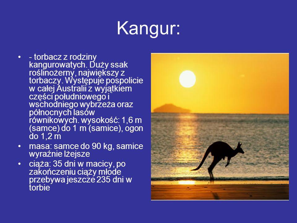 Kangur: