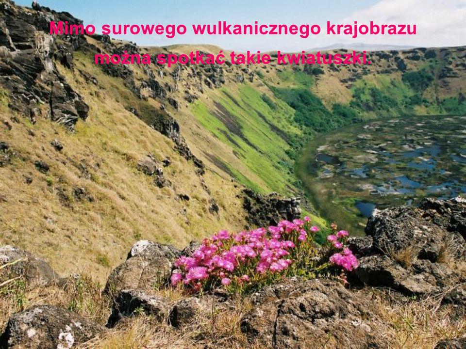 Mimo surowego wulkanicznego krajobrazu można spotkać takie kwiatuszki.