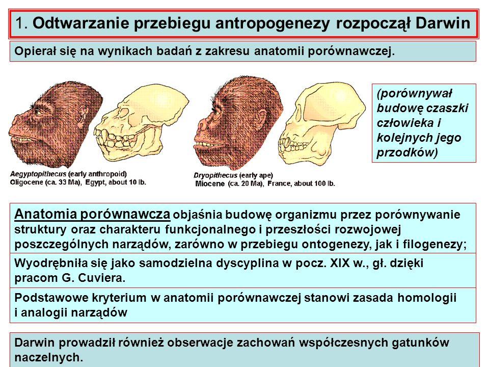 1. Odtwarzanie przebiegu antropogenezy rozpoczął Darwin